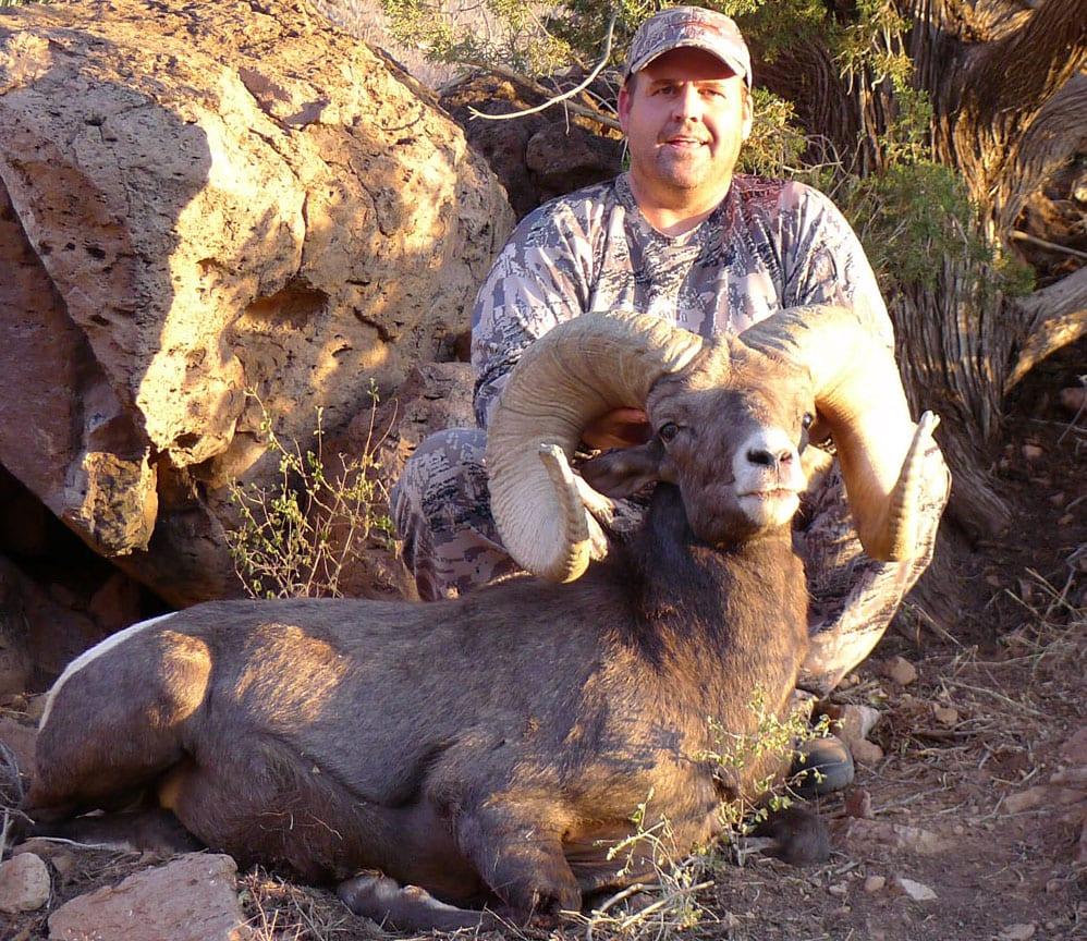 New Mexico Bighorn and Barbary Sheep