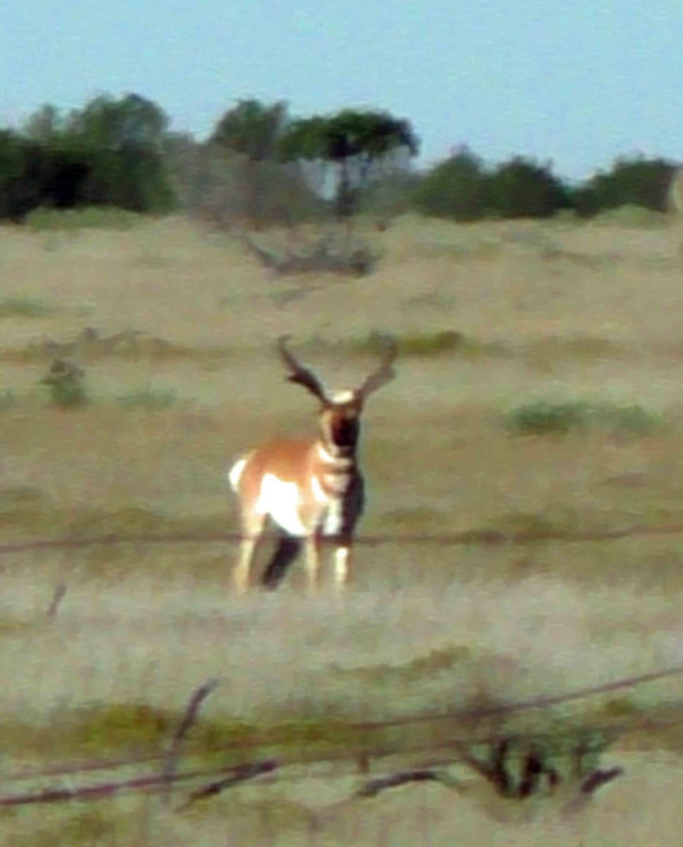 Santa Rosa – Caprock Ima Ranch-Antelope Hunts