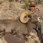 NM Bighorn Sheep