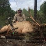 New Mexico Elk