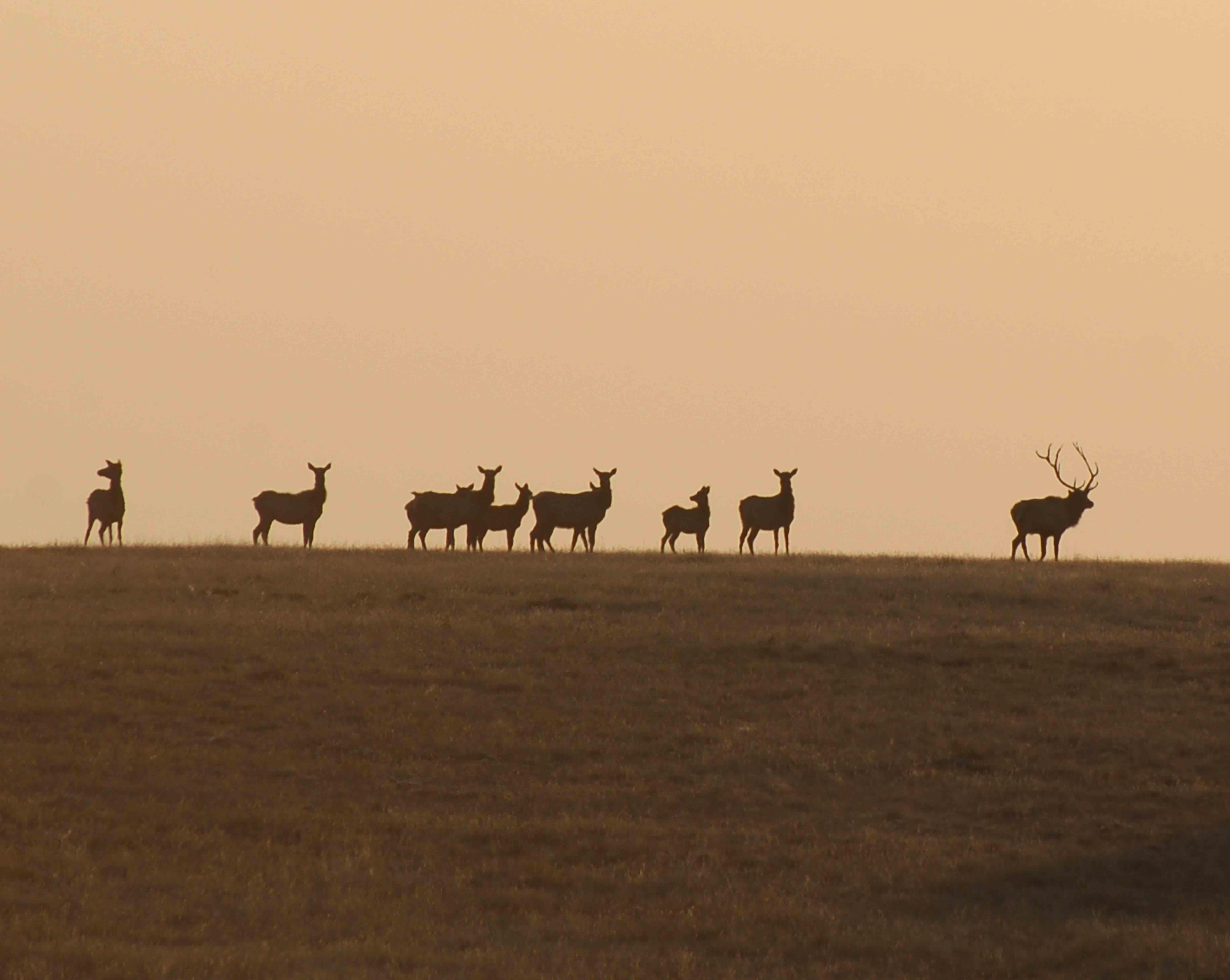 HOBO Ranch Elk Hunts
