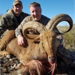 NM Barbary Sheep
